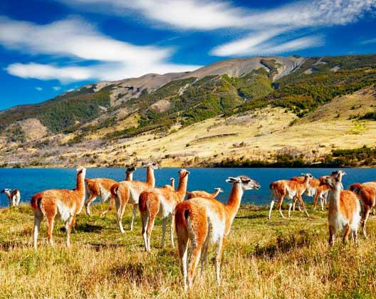Spanisch lernen in Südamerika: Patagonien