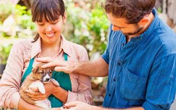 Freiwilligenarbeit in Südamerika: Tierheim