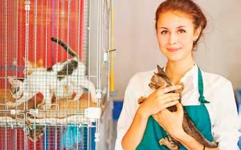 Freiwilligenarbeit in Südamerika: Tierschutz