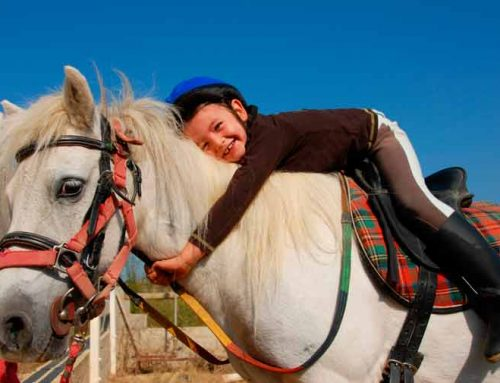 "Package 4: ""Equestrian Tourism"" in Córdoba"
