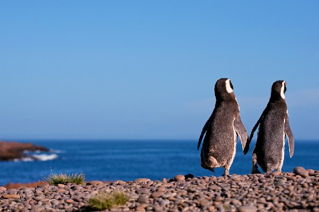 Travel Hacks: Pinguine